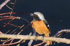 千曲川にいた鳥
