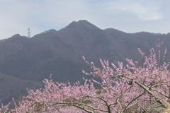 塩山桃源郷 桃と山