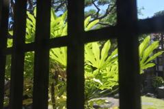 格子窓から