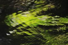 緑のゆらぎ