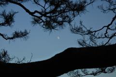 六義園ライトアップ~松と月