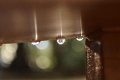 鹿島神宮 雨上がり