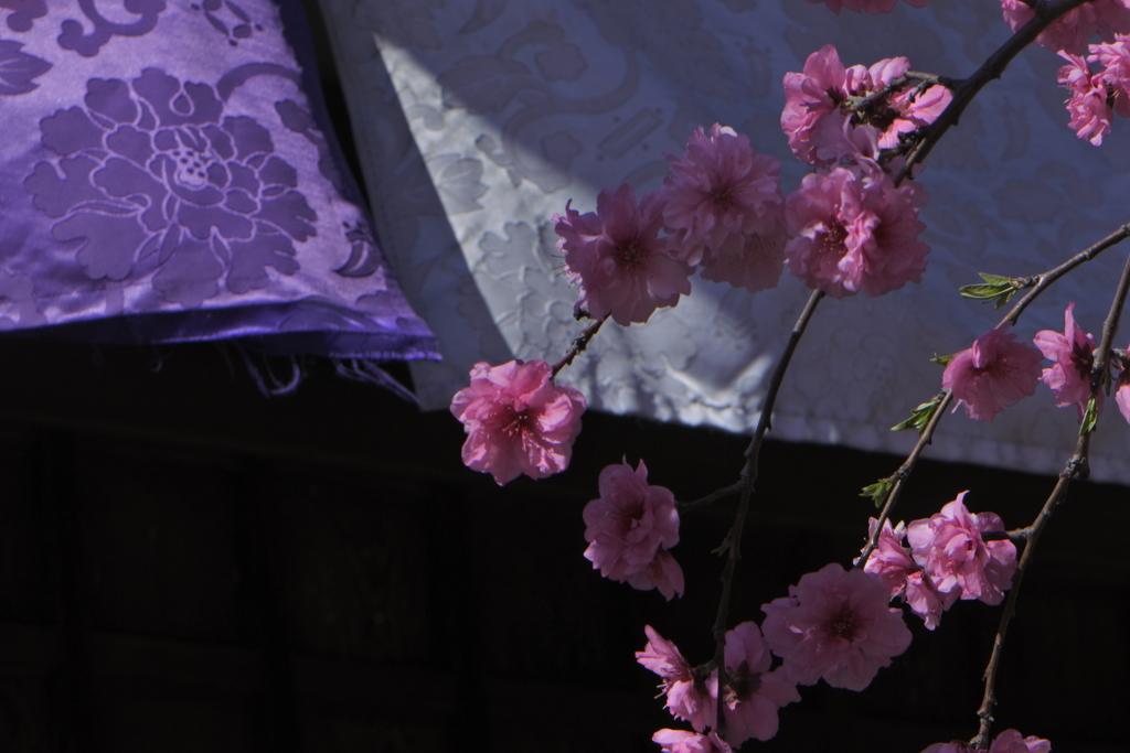 花の咲く寺