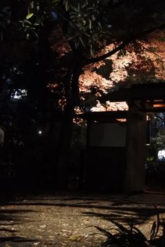 六義園ライトアップ~落ちる影