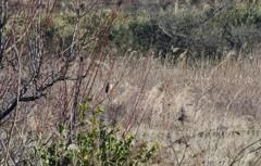 百舌鳥のいる風景