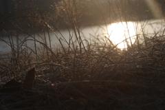 川の目覚め