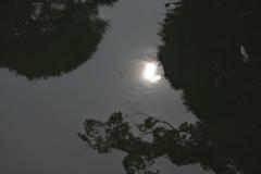 池の中の太陽