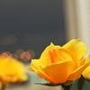 灯りと薔薇