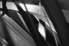 重なり合う葉