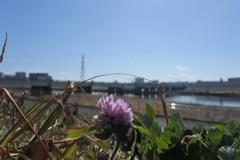 午後の荒川河川敷 2