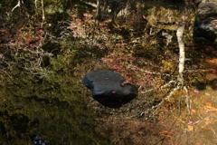 鹿島神宮 御手洗池に映りこむ
