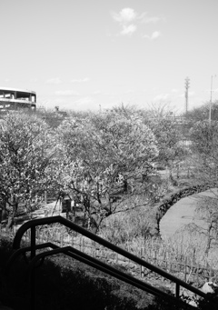 庄屋様の門からの眺め