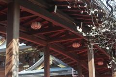 太鼓橋と梅の花