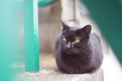 階段の黒猫