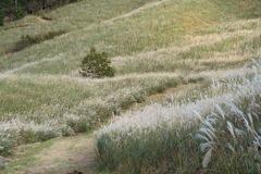 十里木高原