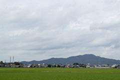 田んぼ10