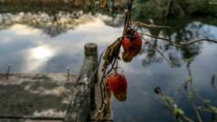 池のお飾り