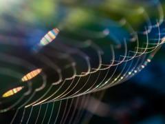 虹色蜘蛛の巣