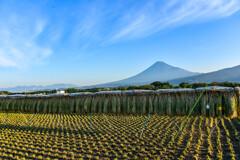 稲刈り後と富士山