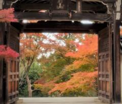 二尊院~日本の美1
