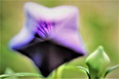 花弁が開いた瞬間