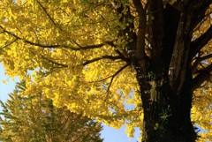秋空に向かって~3