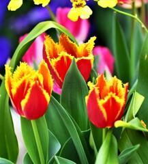 春色 色々