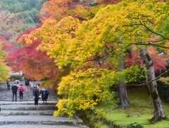 二尊院~日本の美2