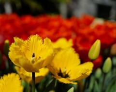 春うらら II