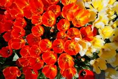眩い~春到来