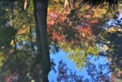 天龍寺 早朝参拝~池にも秋の訪れ