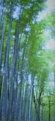 嵯峨野 嵐山  散策~竹林の道