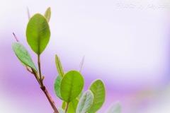 うさぎの葉っぱ