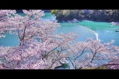 船着場と桜