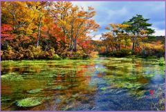 グダリ沼「澄む湧き水沼」
