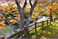 奥入瀬渓流「紅葉.縁日