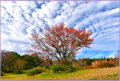 八甲田山「風と共に去りぬ」