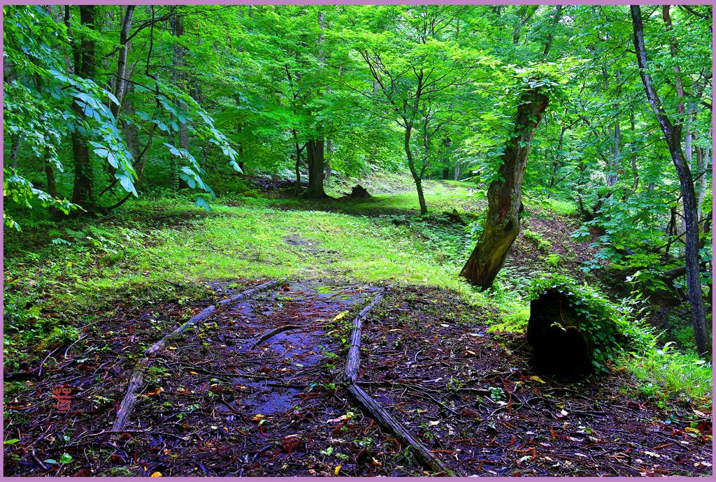 「森の路 Ⅰ」
