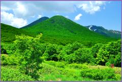 初夏の雛岳