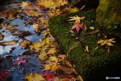 花貫の紅葉