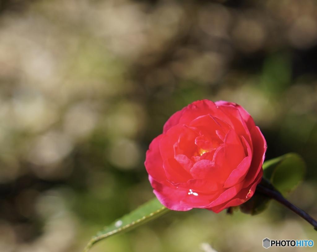☆*:. Bright red flower  .:*☆