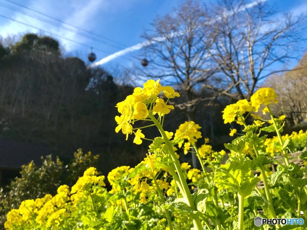 春の神戸布引ハーブ園♡