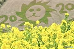 ・*:.。 。.:* 菜の花 2020  ・゚✽.。.:*・゚