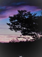 樹の影と空の色彩