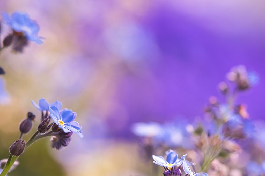 ~~~  「  春のブルー   」 ~~~