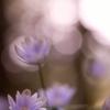 ・・陽だまりの紫・・