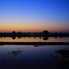 水田の夜明け