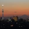 スカイツリーと富士