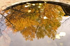 秋色の映り込み