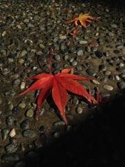 落ち葉1 2015 iPhone 4S